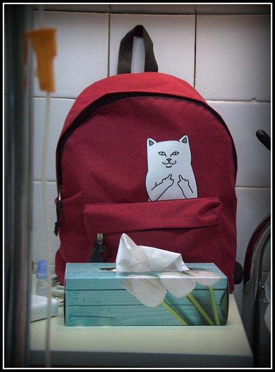 Kot strażnik blog