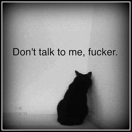 kot w kącie2